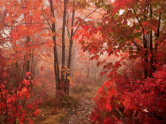 autumn_forest_wallpaper_2-normal
